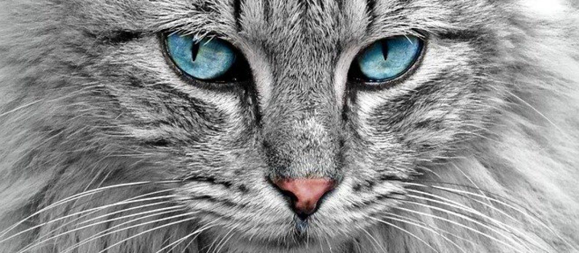 ציוד והאביזרים לחתולים
